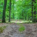 Wielkopolski Park Narodowy - Grabina